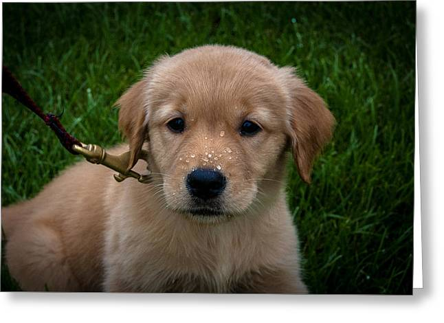 Puppies Photographs Greeting Cards - Puppy Greeting Card by William Wight