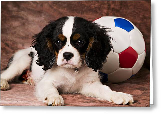 Youthful Greeting Cards - Puppy with ball Greeting Card by Garry Gay