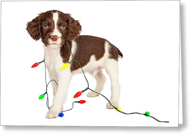 Puppy Wrapped In Christmas Lights Greeting Card by Susan Schmitz