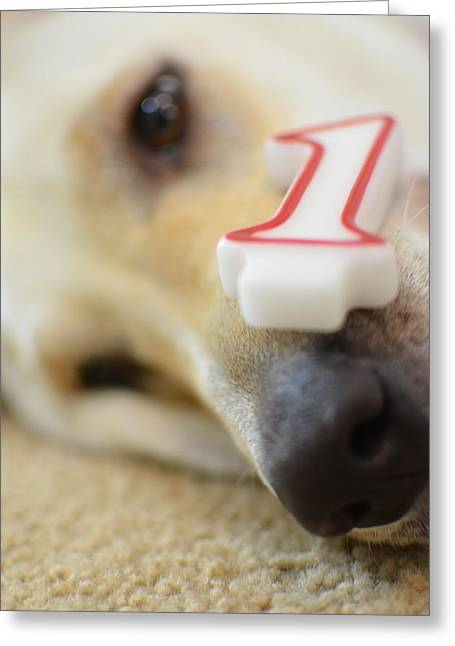 Doggies Greeting Cards - Puppys First Birthday Greeting Card by Luke Pickard