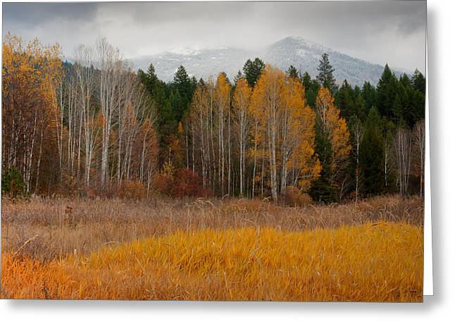 Snow Capped Greeting Cards - Purcell Gold Greeting Card by Idaho Scenic Images Linda Lantzy