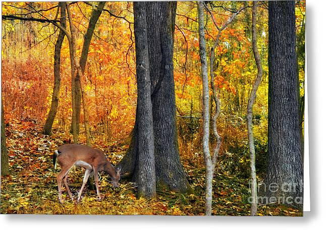 Autumn Photographs Greeting Cards - Pure Autumn Greeting Card by Kathy Jennings