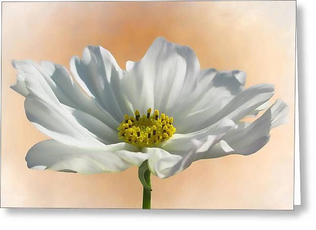 Cosmos Mixed Media Greeting Cards - Pure Cosmos Greeting Card by Sharon Lisa Clarke