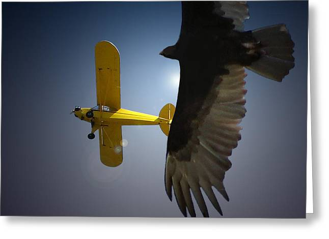 Award Winning Art Greeting Cards - Pure Flight Greeting Card by Curtis Chapline
