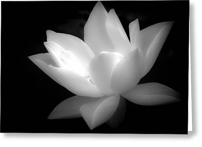 White Photographs Greeting Cards - Purity Greeting Card by Julie Palencia