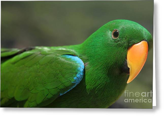 Parrot Art Print Greeting Cards - Purity of Grace Greeting Card by Sharon Mau