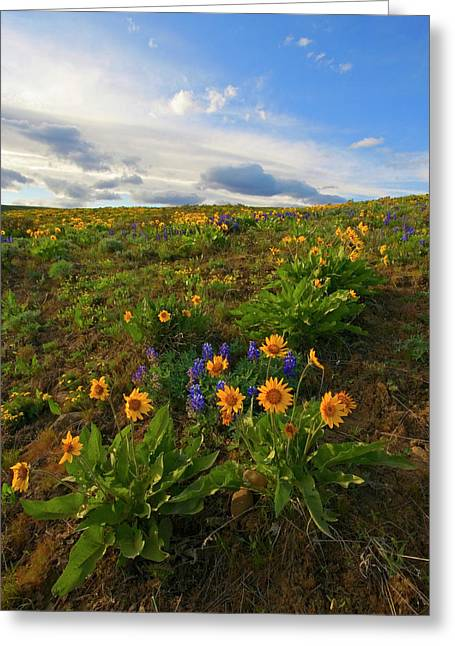Ranch Greeting Cards - Purple and  Gold Greeting Card by Mike  Dawson