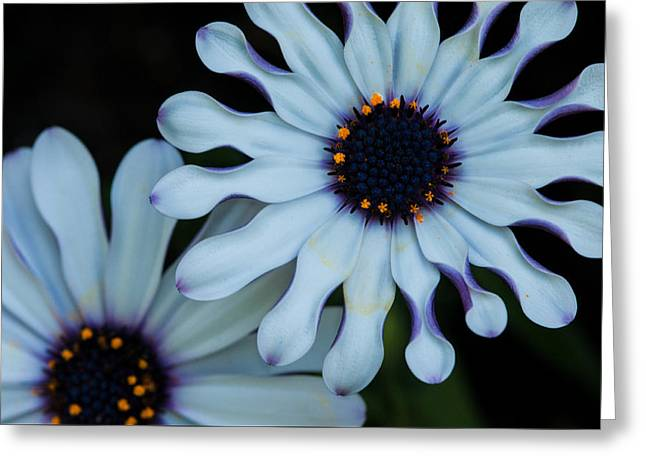 Abloom Greeting Cards - Purple and white Greeting Card by Nathan Wright