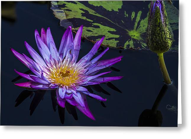 Nature Center Pond Greeting Cards - Purple and Yellow Water Lily Greeting Card by Lindley Johnson