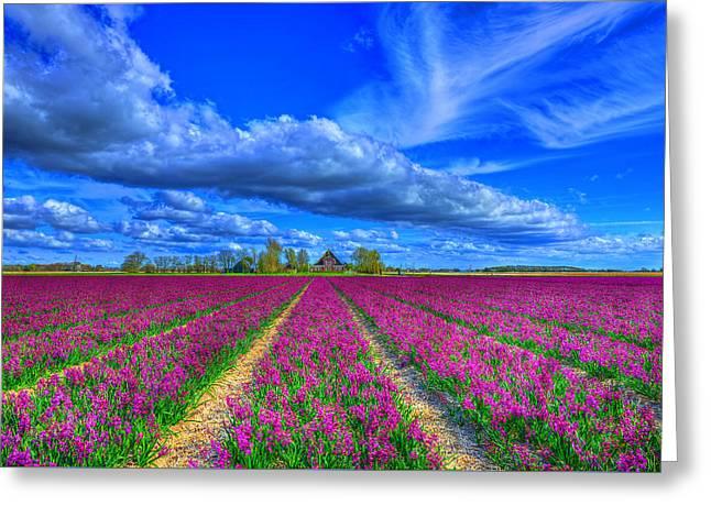 Hyacinth Greeting Cards - Purple Awakening Greeting Card by Midori Chan