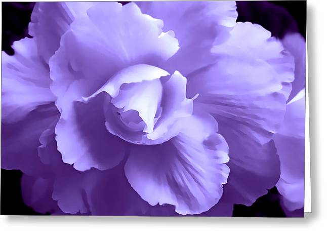 Begonia Garden Greeting Cards - Purple Begonia Floral  Greeting Card by Jennie Marie Schell