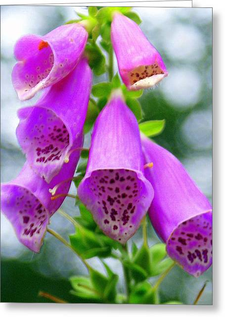 Marty Koch Greeting Cards - Purple Bells Greeting Card by Marty Koch
