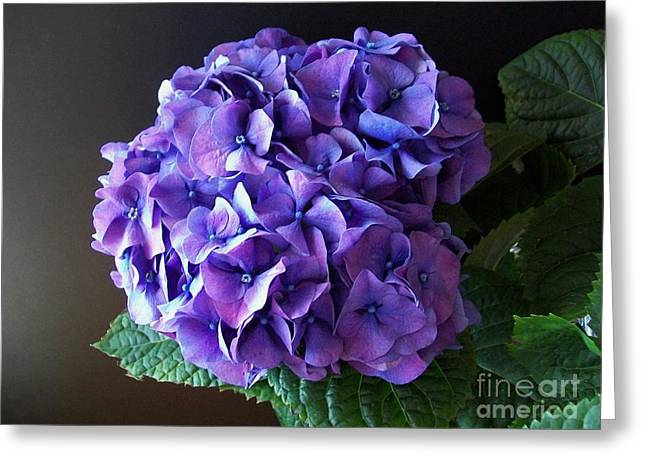 Photographs Of Flowers Greeting Cards - Purple Bloom Greeting Card by Marsha Heiken