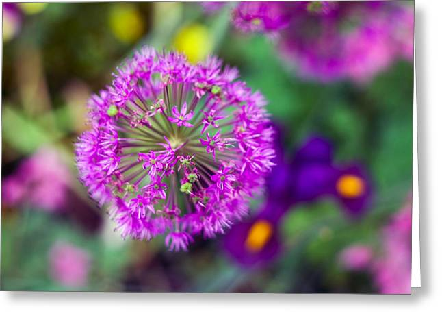 Close Up Floral Greeting Cards - Purple Blossom Greeting Card by June Marie Sobrito