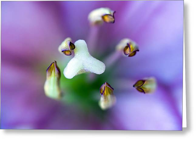 Purple Abstract Greeting Cards - Purple Botanical Greeting Card by Frank Tschakert