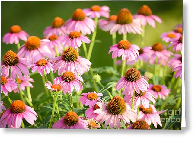 Vibrant Green Greeting Cards - Purple Coneflowers Greeting Card by Jt PhotoDesign