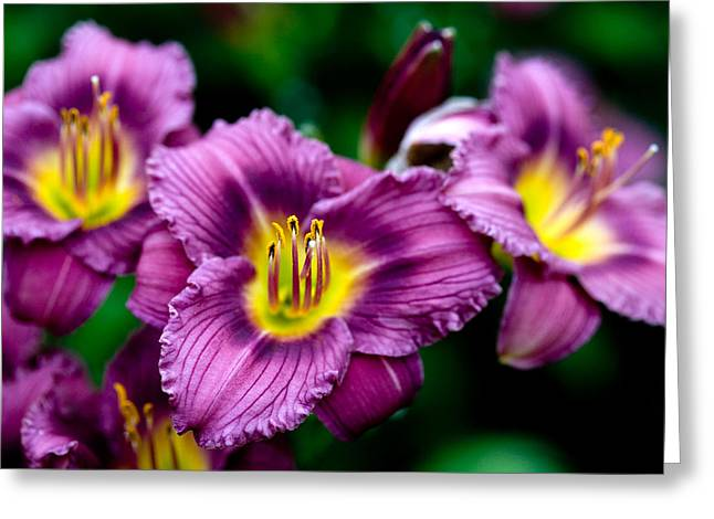 Best Sellers -  - Day Lilly Greeting Cards - Purple Day Lillies Greeting Card by Marilyn Hunt
