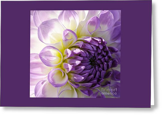 Swans... Greeting Cards - Purple Delight Greeting Card by Nick  Boren