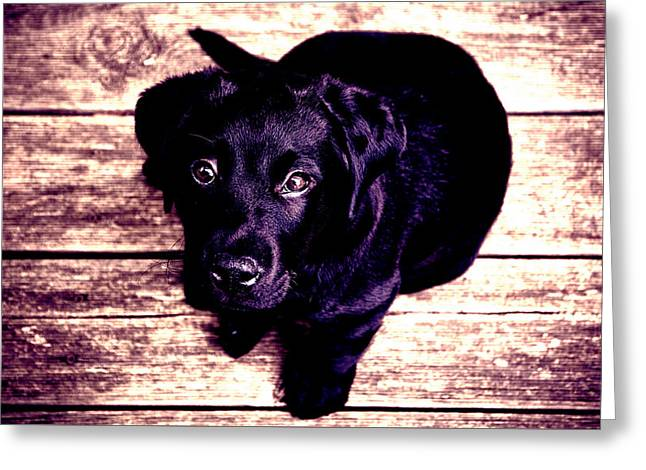 Puppies Digital Greeting Cards - Purple Dog Greeting Card by John Kelly