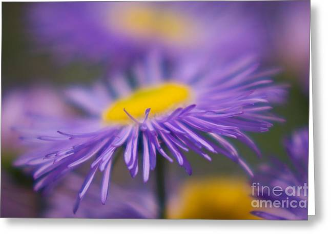 Angela Doelling Ad Design Photo And Photoart Greeting Cards - Purple dream Greeting Card by Angela Doelling AD DESIGN Photo and PhotoArt