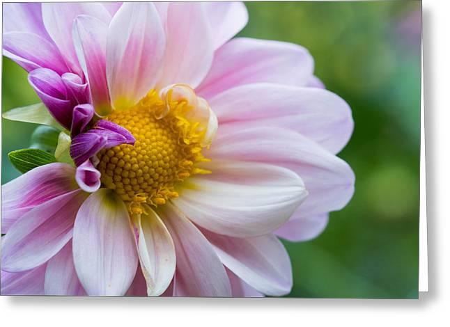 Purple Flower Greeting Card by Mauricio Fernandez