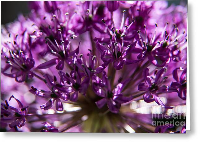 Blooming Pyrography Greeting Cards - Purple Flower Greeting Card by Olga Photography