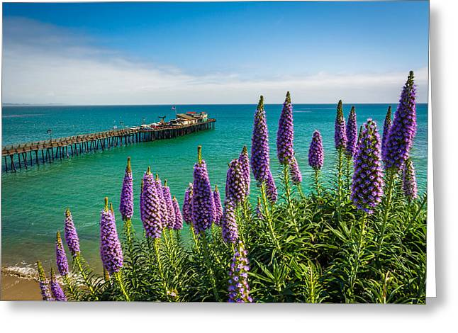 Santa Cruz Wharf Greeting Cards - Purple flowers and view of the pier in Capitola California Greeting Card by Jon Bilous