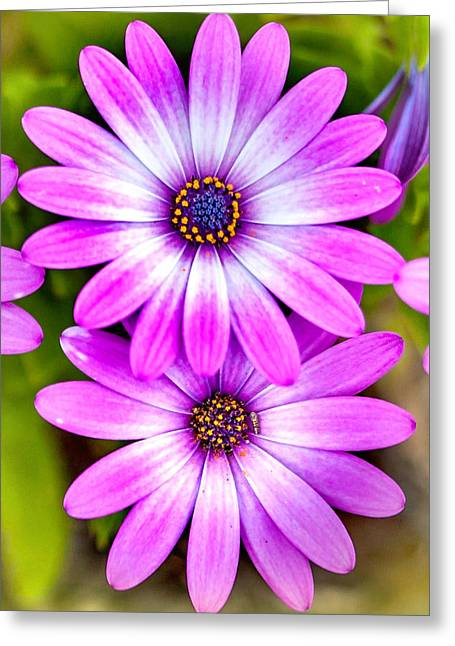 Photos Of Autumn Greeting Cards - Purple Flowers Greeting Card by Az Jackson