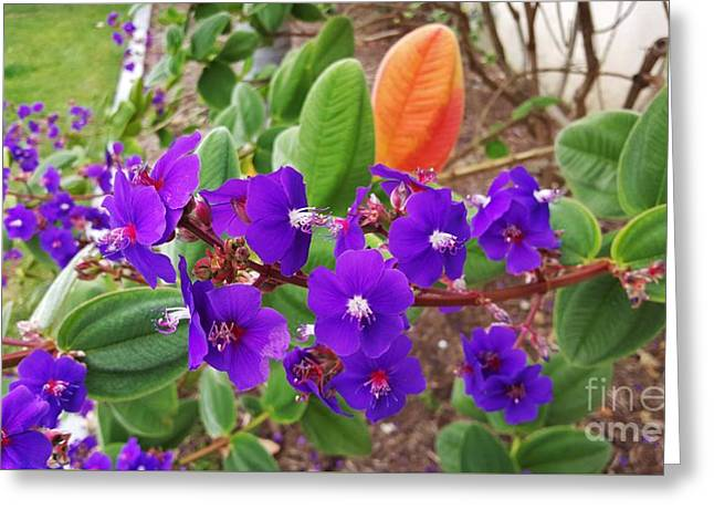 Bloosom Greeting Cards - Purple flowers with  orange leaf Greeting Card by Jasna Gopic