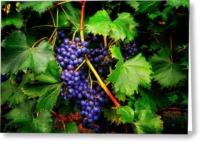 Grapes Greeting Card by Greg Mimbs