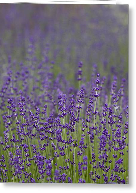 Purple Haze Greeting Card by Rebecca Cozart