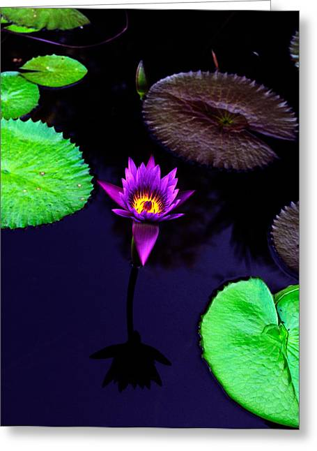 Floral Greeting Cards - Purple Lily Greeting Card by Gary Dean Mercer Clark
