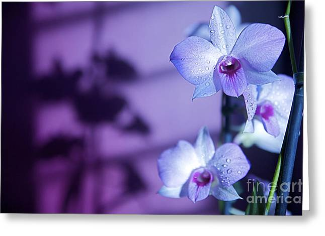 Moist Greeting Cards - Purple lit Orchids Greeting Card by Kicka Witte - Printscapes