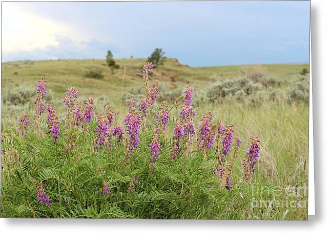 Purple Loco Wildflower In The Wilds Of Montana Greeting Card by Adam Long