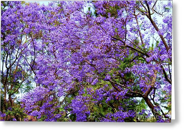 Purple Madness  Greeting Card by Mariola Bitner