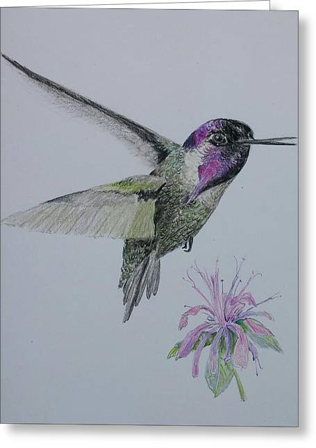 Costa Drawings Greeting Cards - Purple Magic Greeting Card by Sally Atchinson