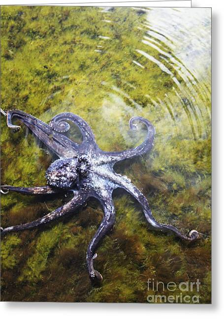 Purple Octopus I Greeting Card by Brandon Tabiolo - Printscapes