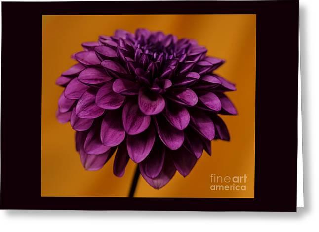 Swans... Greeting Cards - Purple On Orange Greeting Card by Nick  Boren