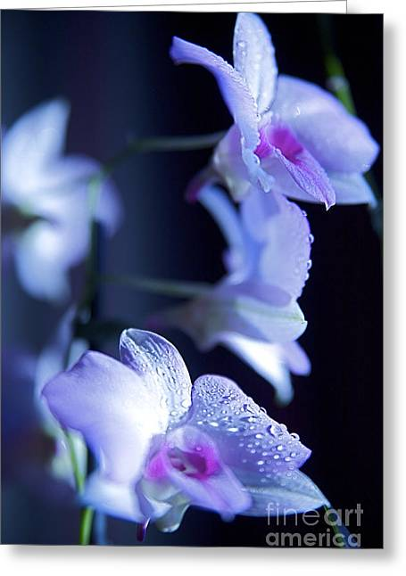 Moist Greeting Cards - Purple Orchid Greeting Card by Kicka Witte - Printscapes