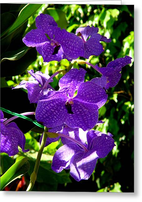 Purple Orchids Greeting Card by Susanne Van Hulst