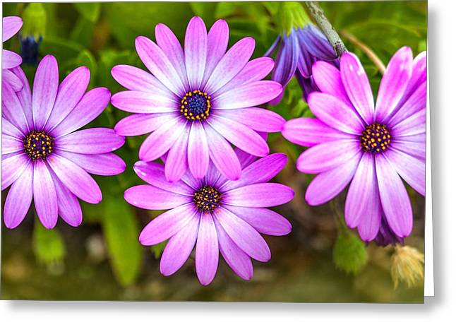 Flower Photographers Greeting Cards - Purple Pals Greeting Card by Az Jackson