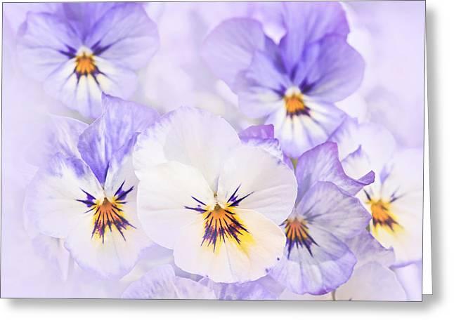 Pansies Greeting Cards - Purple Pansies Greeting Card by Elena Elisseeva