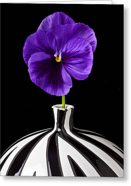 Annuals Greeting Cards - Purple Pansy Greeting Card by Garry Gay