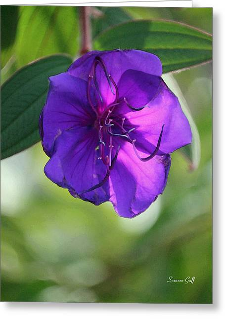 Purple Passion Greeting Card by Suzanne Gaff