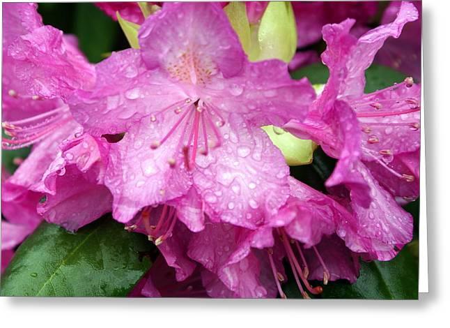 Purple Pink Horizontal Greeting Card by Marty Koch