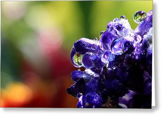 Purple Rain Greeting Card by Gary Yost