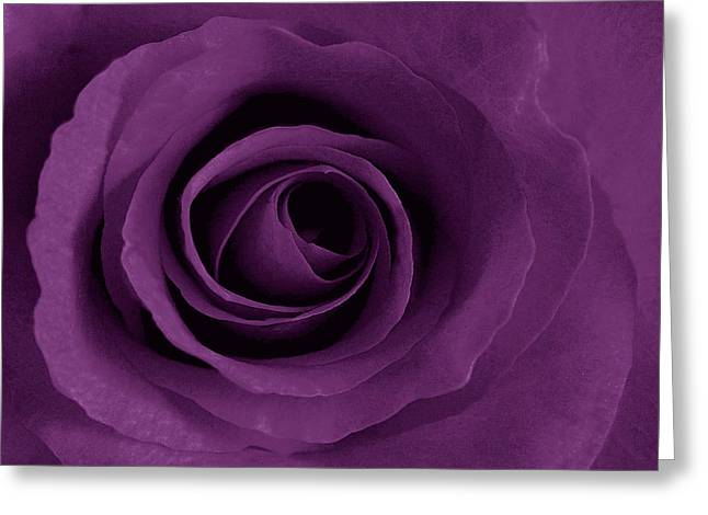 Purple Rose Of Artsy Greeting Card by Leonard Rosenfield