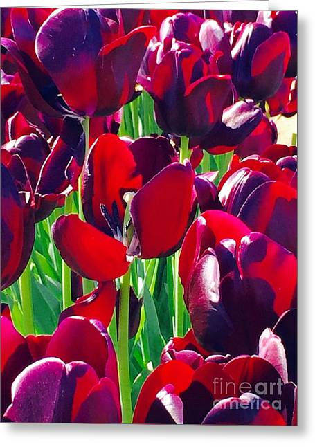 Purchase Greeting Cards - Purple Royals Tulips Greeting Card by Susan Garren