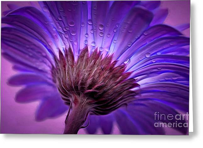 Innocence Greeting Cards - Purple Serenity Greeting Card by Krissy Katsimbras