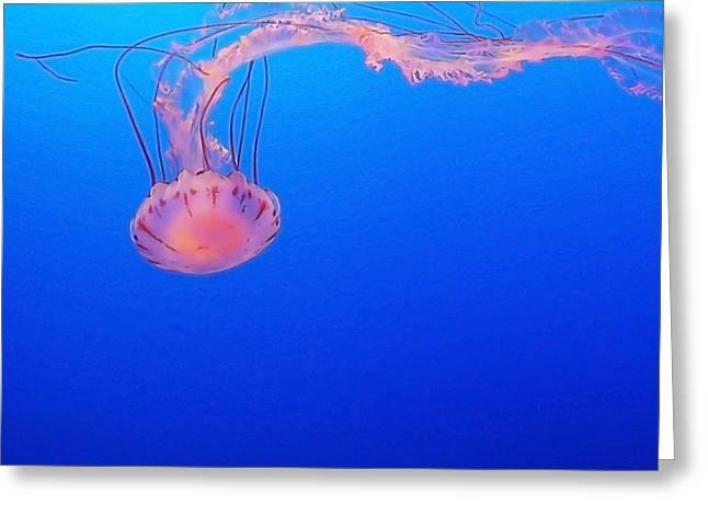 Purple Jellyfish Greeting Cards - Purple Striped Jellyfish Greeting Card by Art Block Collections